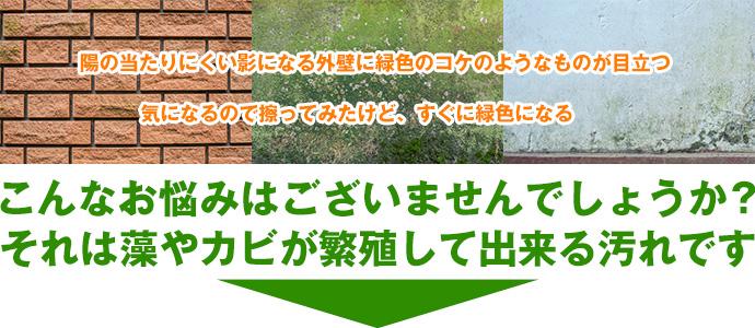 外壁の藻・カビ対策